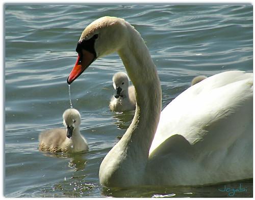 Maman et bébés by Jogabi-Michèle