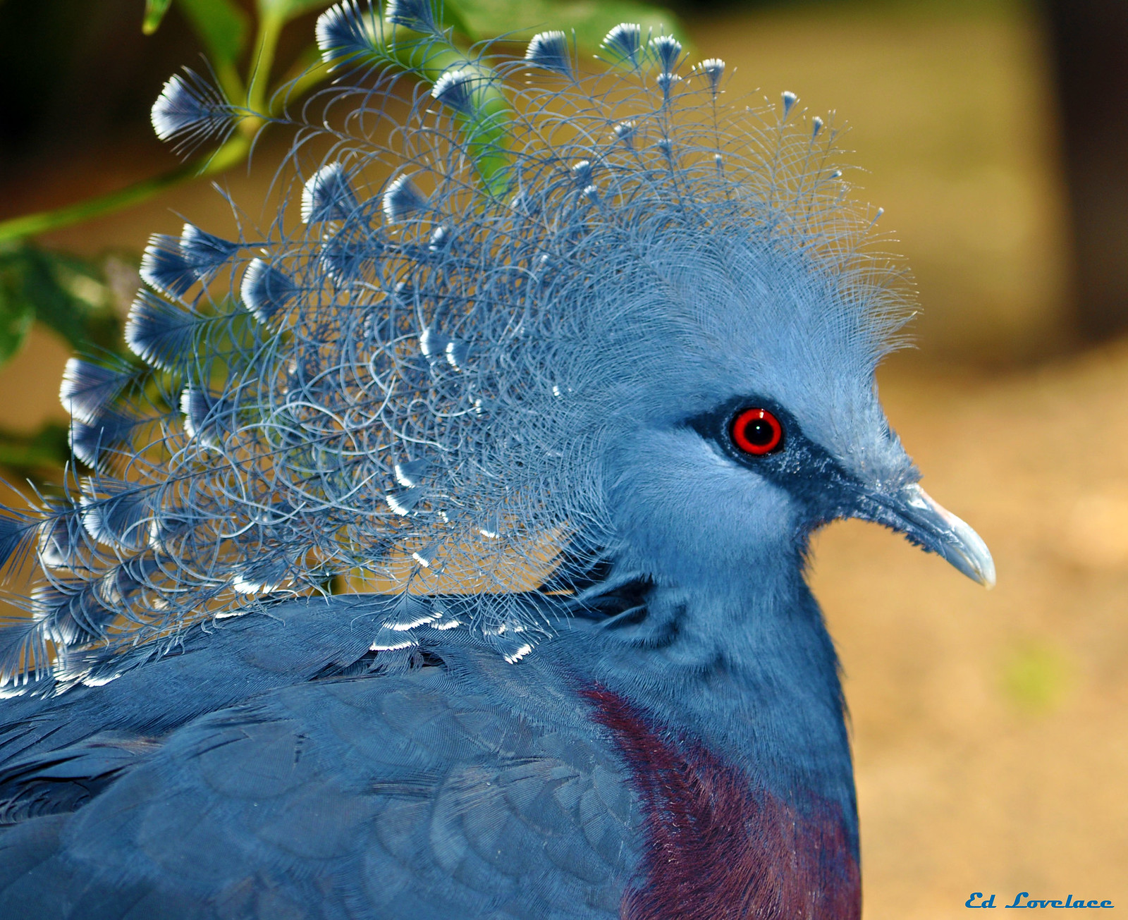 Pigeon on Pholder | 1000+ Pigeon images that made the ...