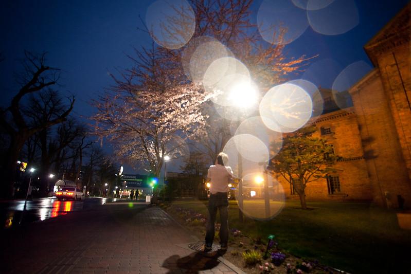 夜櫻,暮光下、微雨飛,平添一分浪漫