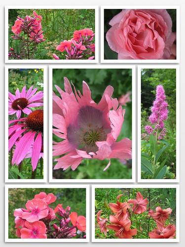 Pyryn puutarhasta a by Anna Amnell
