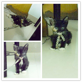 My little cat ♥