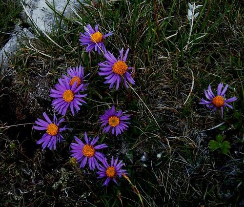Stille der Alpen 2012