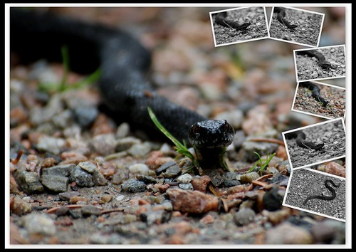 My #photo #Snake project Place; Hurum #Norway by @heidenstrom