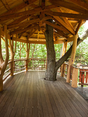 Inside of the tree house