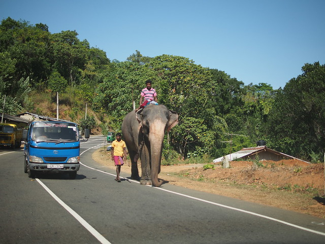 Elephant walking on a national road