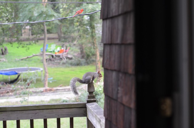 Pastry squirrel stopped in to watch