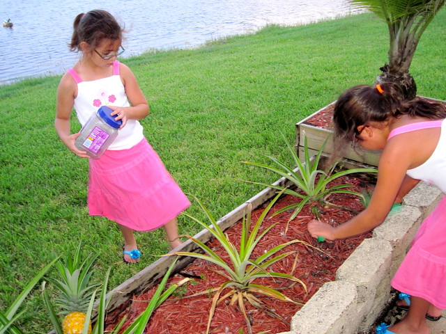 Nietas catching anoles 20120726