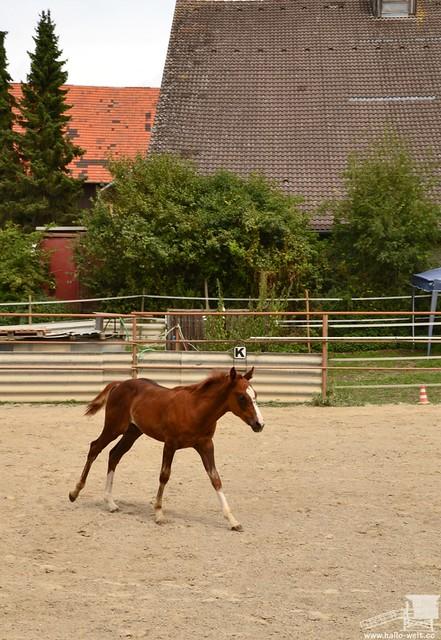 Pferdehof (20)