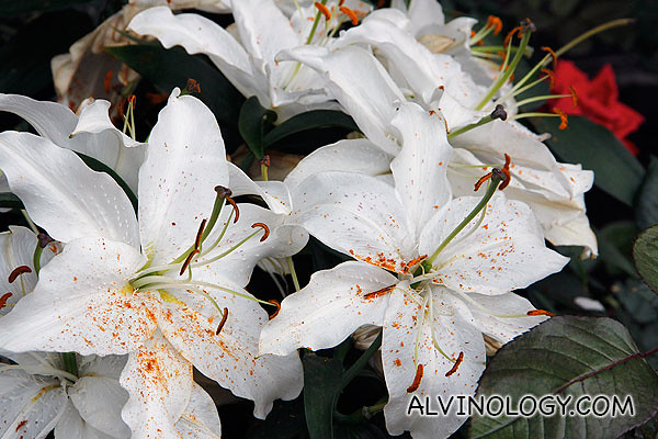 Pretty white flowers with sprinkles of orange