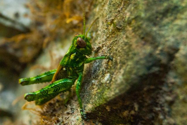 Grand Gulf State Park-July 22, 2012-_DNR0305.jpg