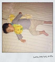 とらちゃん、午前の昼寝(2012/4/29)