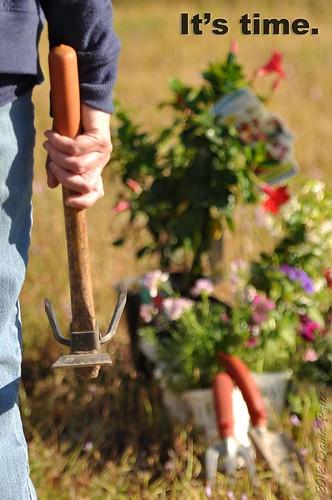 DSC_7231A - 2012 P52 Week 15 Gardening (Alternate Crop).jpg