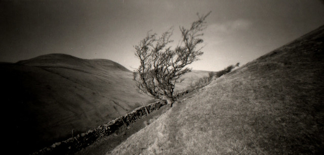 Hawthorn and Yarlside, Howgill Fells