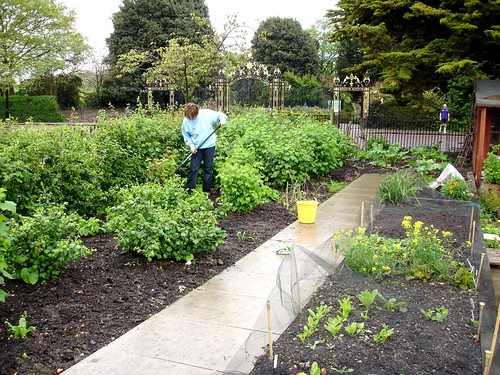 We've adopted a plot in Regent's Park