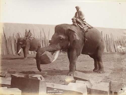 Elephants at work by The National Archives UK