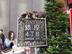 Some cool cats in Ginza