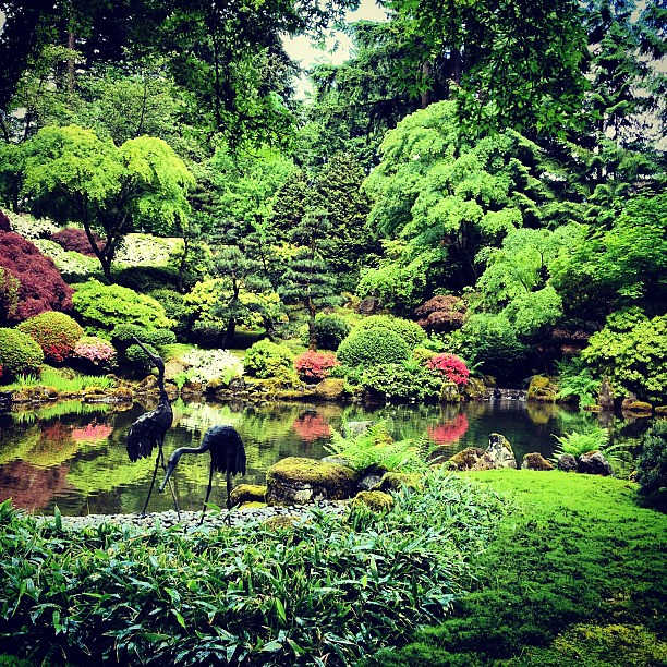 Koi pond at portland japanese garden flickr photo sharing for Portland japanese garden koi