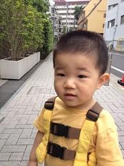 朝散歩とらちゃん(2012/6/1)