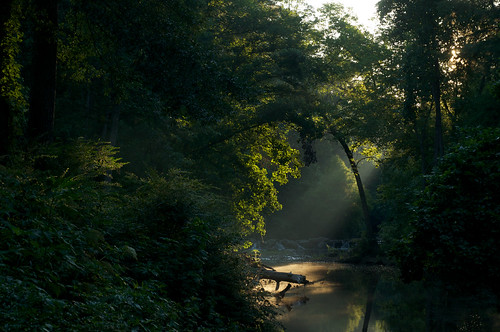 morning trees water forest sunrise dawn stream time illuminated rockcreek photospecs galleryforest