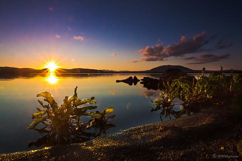 sunset lake iceland vatn sólsetur álftavatn rumexlongifolius njóli northerndock hphson