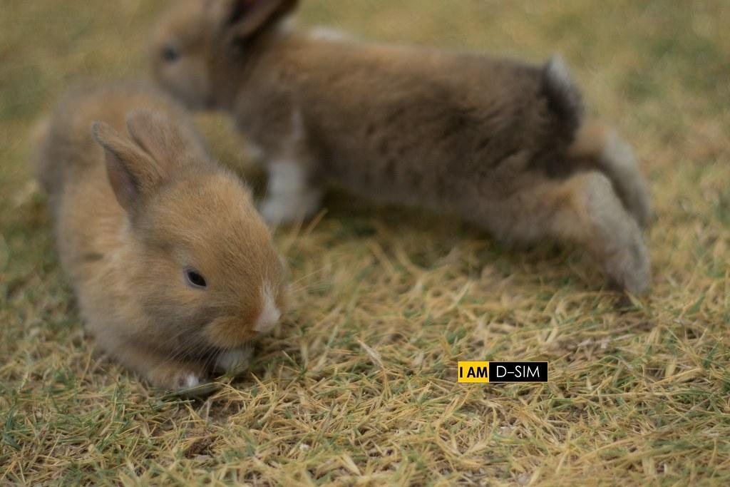 Baby Rabbit (15)