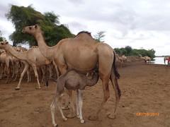 Somalia June 2012