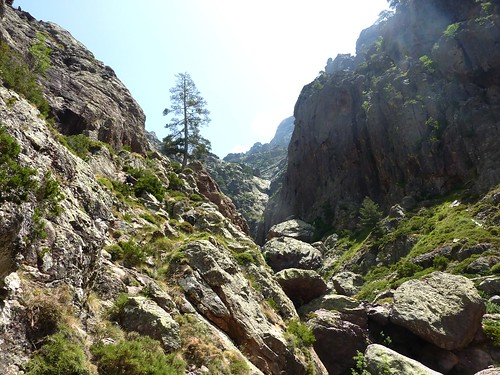 Trace cairnée de Tana di l'Orsu : fin de la descente avec le dernier pas d'escalade 'gazeux' au pin lariciu