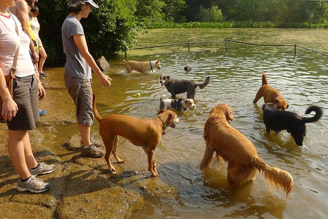 Dog Pond, Prospect Park
