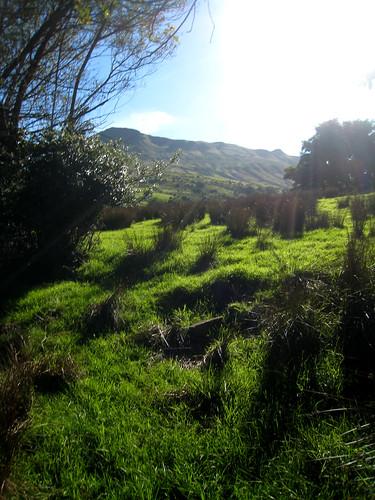 Dan's farm 2 - Leitrim 2010