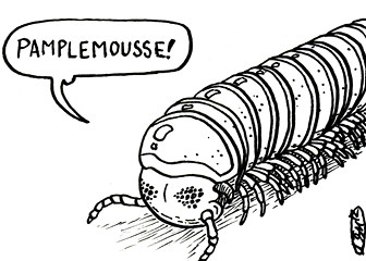 ds13.1---pamplemoussemillipede