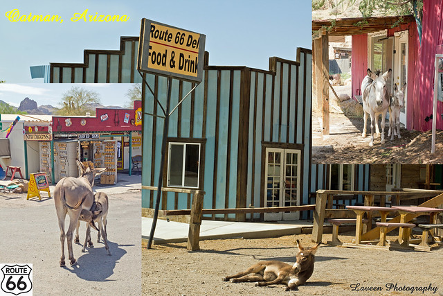 oatman single guys Travel news & deals you'll get panhandled (by burros) and shot at (by fake bad guys) in oatman, a route 66 town that's a triumph of reinvention.