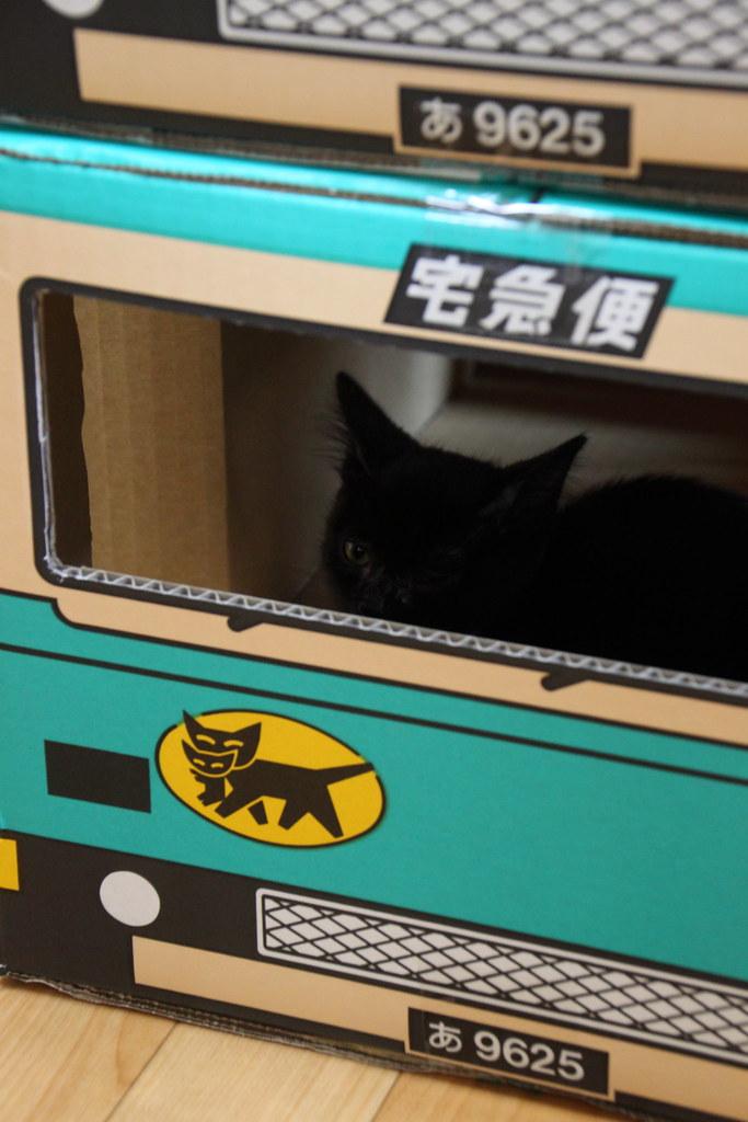 黒猫子猫とクロネコ宅急便ダンボール 1