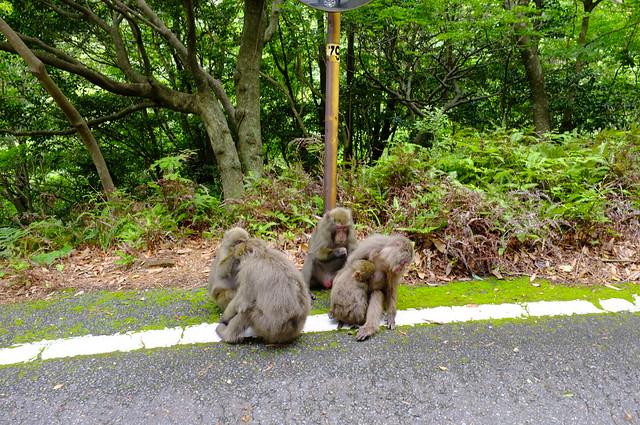 Monkeys on the road.