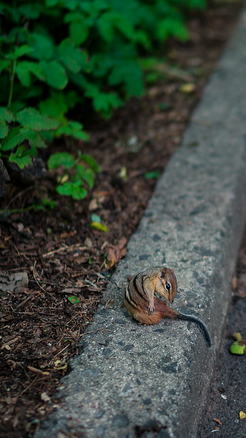 Wild Life of New York #2