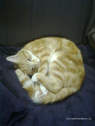 [Reunited] Sun, Apr 22nd, 2012 Lost Female Cat - Near Knockalough Lake, Kilmihil, Clare