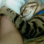 Tiger_siesta_verano2008_4