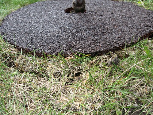 tree ring with sod