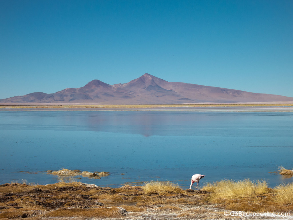 A lone flamingo feeds at the water's edge