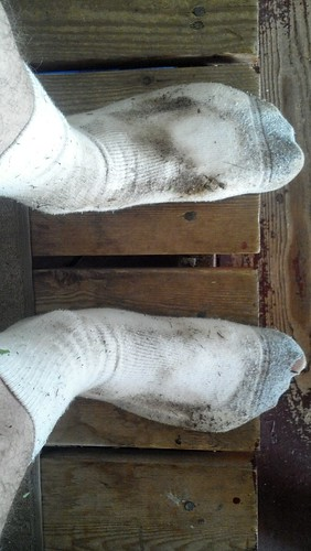 dirty socks after weeding
