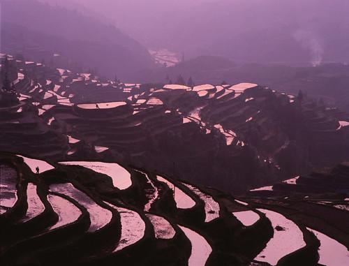china sunset iso100 fuji purple rice terrace velvia bronica 中国 guizhou 夕日 f40 紫 150mm etrsi zenza 棚田 zenzanon ゼンザブロニカ 貴州省 ゼンザノン