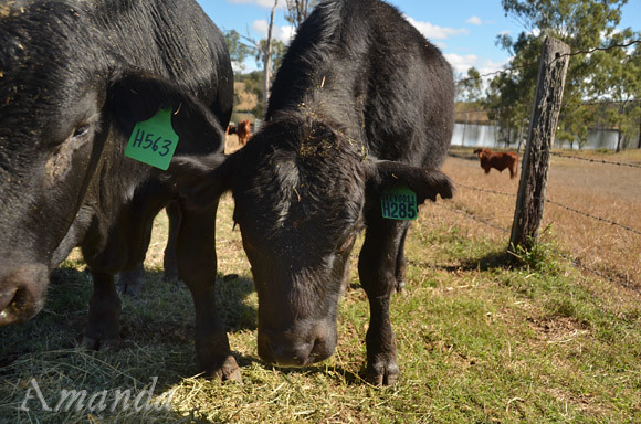 weaners_6815