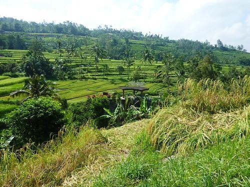 Bali-Route Legian-Jatiluwih (55)