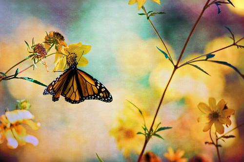 無料写真素材, 動物 , 昆虫, 蝶・チョウ