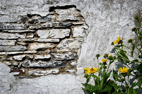 Flowers & Wall