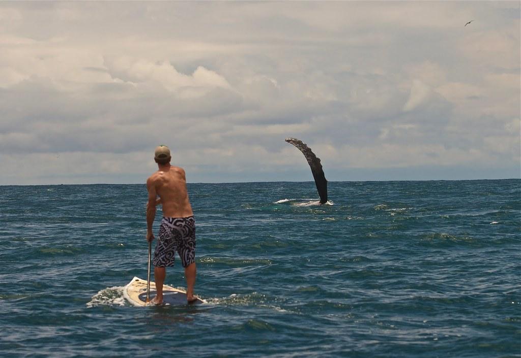 Nuqui surf jim brewer wing