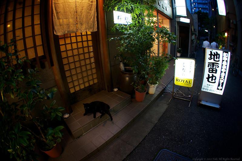 Poster Black Cat