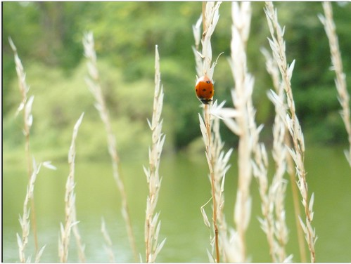 A Ladybird by the Lake... (sooc)