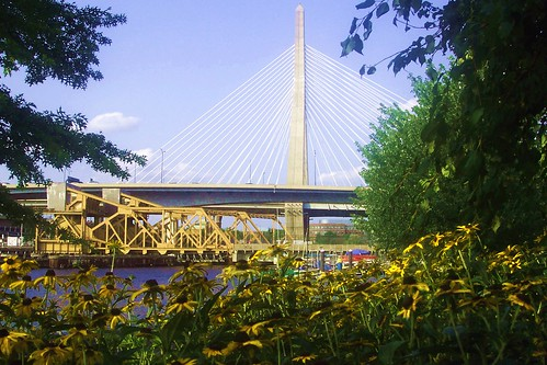 Zakim Sunflowers 2