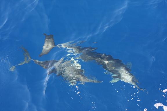 dolphins at Marine park, Alonissos