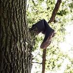 #märchen . Der verkaterte #Stiefel. #Baum #tree #fairytale #natur #nature #life #art #motorola #streetphoto #urbanlife #urbanart @pepaline